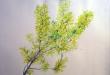 kwiaty-akwarele-001