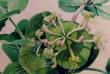 kwiaty-akwarele-002