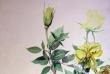 kwiaty-akwarele-004
