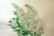 kwiaty-akwarele-008
